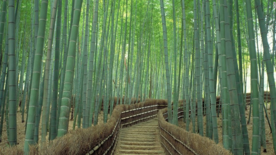 140807210033-1-sagano-bamboo-forest-horizontal-large-gallery